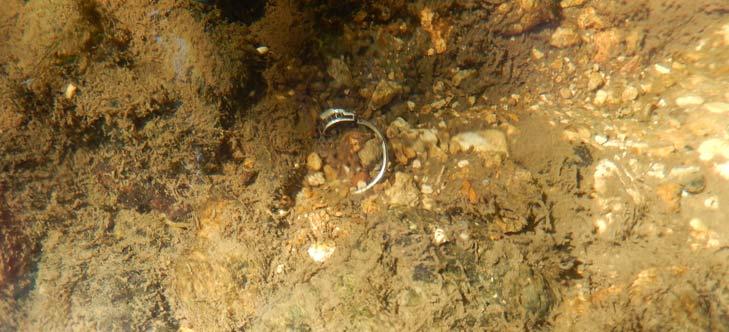 Detection en rivière Teknetics EUROTEK PRO